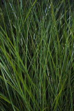 Beplanting | Groen siergras van Niels Jaeqx