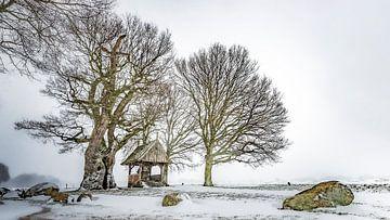 Kroezeboom bij Fleringen