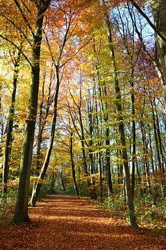Herfst in al haar glorie von Marcel van Duinen