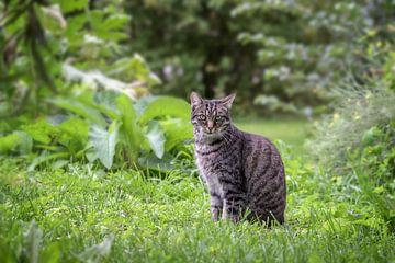 tabby kat zit in het gras in een tuin en kijkt recht in de camera, groene achtergrond met kopieerrui van Maren Winter