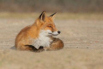 Entspannter Fuchs von Anna Stelloo