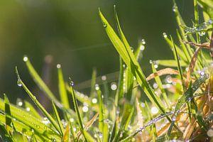Gras in de ochtenddauw van Jeffrey Tukker