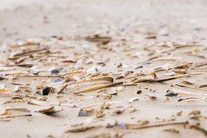 Schelpen op het strand / Shells on the beach