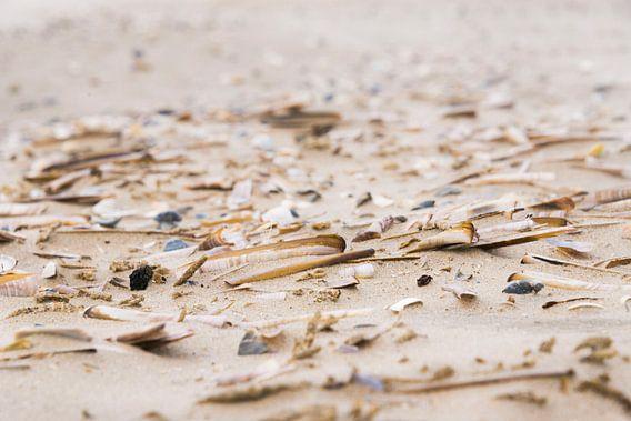 Schelpen op het strand / Shells on the beach van Coby Zwartbol