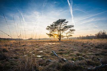 Eenzame boom van Max ter Burg Fotografie