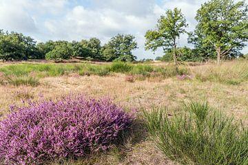 Bunte Heide im Vordergrund eines Naturschutzgebietes von Ruud Morijn