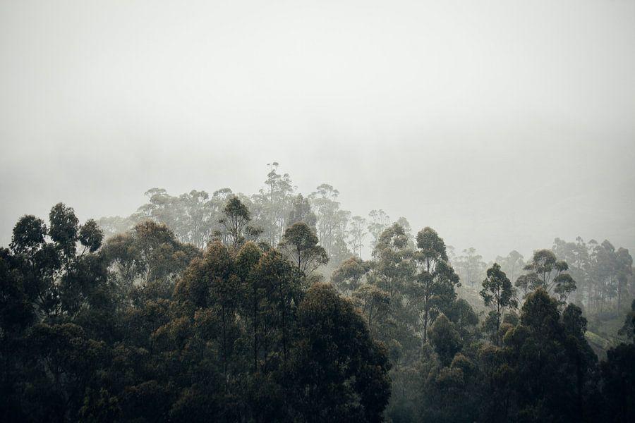 In de wolken bij Liptons Seat in Haputale, Sri Lanka van Rebecca Gruppen