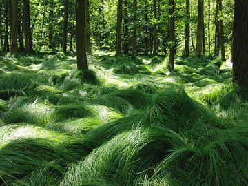 Dancing grasses sur Titia Buren