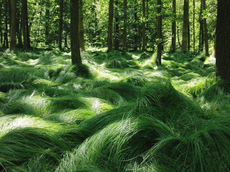 Dansende grassen van Titia Buren