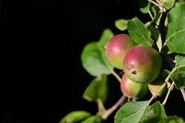 Onrijpe appels op een tak van Ulrike Leone