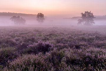 Juste avant le lever du soleil sur la bruyère des poètes du Limbourg belge, Belgique sur Fotografie Krist / Top Foto Vlaanderen