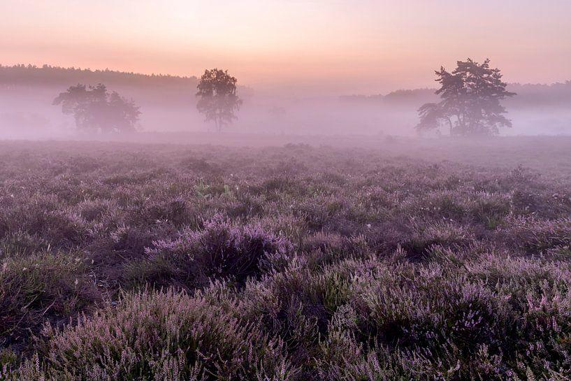 Even voor zonsopkomst op de heide van de wijers in belgisch Limburg, Belgie van Krist Hooghe