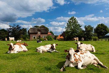 Koeien in de Wei, Zelhem von Natuurlijk Achterhoek