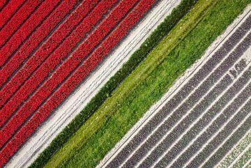 Drone shot tulpen van bovenaf van Pierre Verhoeven