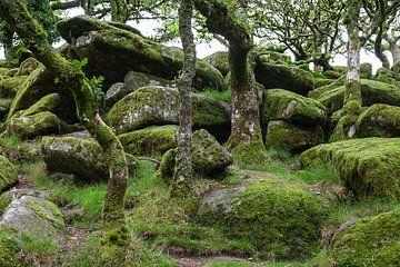 Mos in het bos van Dick Doorduin