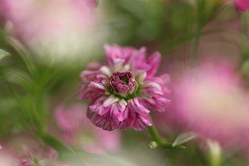 Rosa Gypsophila von Bärbel Severens