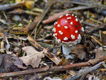 Eerste paddenstoelen gespot