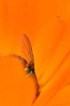 Mug vleugel oranje von Sascha van Dam