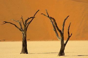 Tote Bäume von Minie Drost