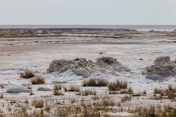 Zoutpan in Etosha NP van Henri Kok