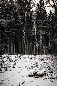 Bomen in het bos van
