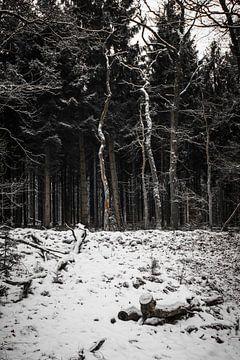 Bomen in het bos van Marco Bakker