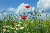 Sommer van Ostsee Bilder thumbnail