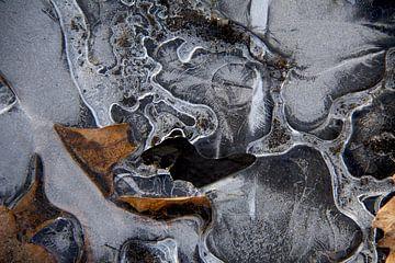 frozen leaf2 van Piotr Kutolowski