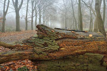 Gegenüberliegende Bäume von Cees van Gastel