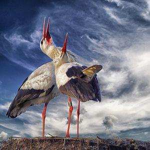 Klepperende ooievaars op nest van