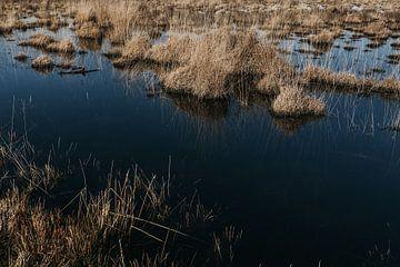 Kalmthoutse Heide | Hohe Gräser im klaren blauen Wasser von Floor Bogaerts