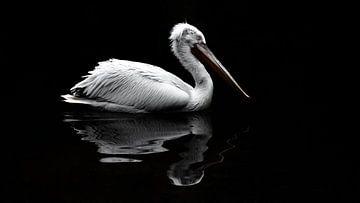 Witte Pelikaan van opzij. van Alex Pansier
