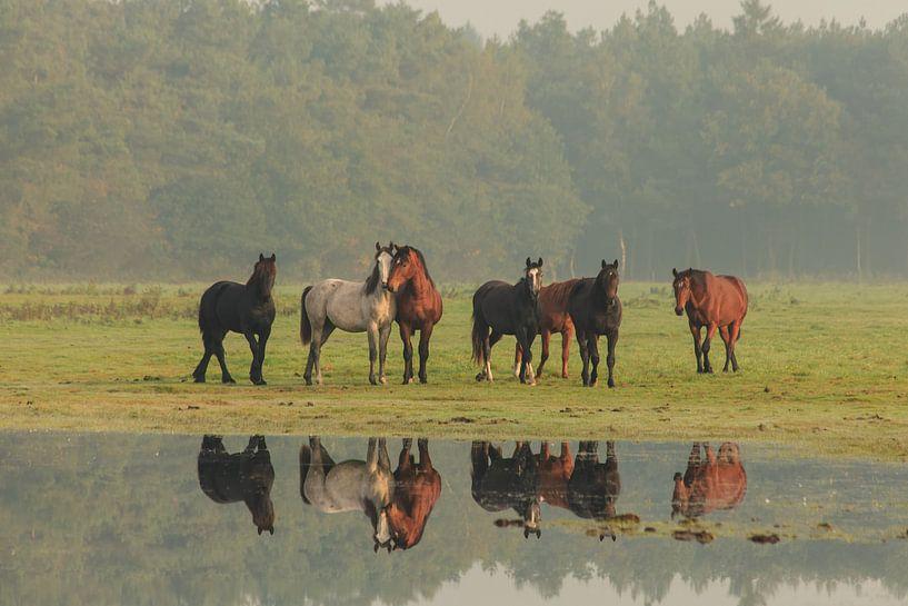 Nieuwsgierige paarden (IV) van Anneke Hooijer