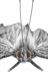 Butterfly van