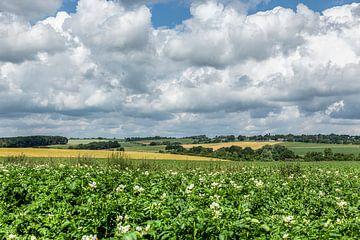 Bloeiende aardappel velden in de omgeving van Simpelveld van John Kreukniet