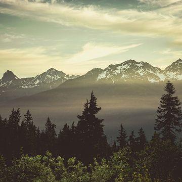 Wald Mountain Sunrise-Platz, Nature Magick  von PI Creative Art