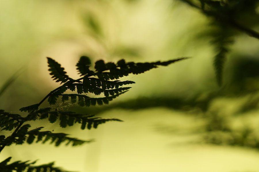 Varen in bos