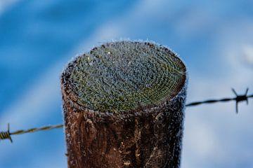 Paal met ijskristallen. van Christophe Fruyt