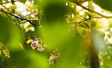 Zonlicht door de bomen in de lente van