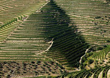 Druiventeelt in de Douro vallei, Portugal von Harrie Muis