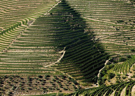 Druiventeelt in de Douro vallei, Portugal