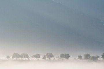 Weg met bomen nabij Gubbio, de Marken van Rens Kromhout