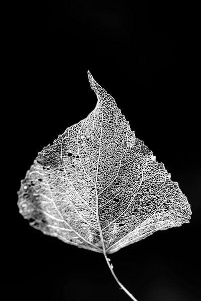 Fading Nature 13 van Pieter van Roijen
