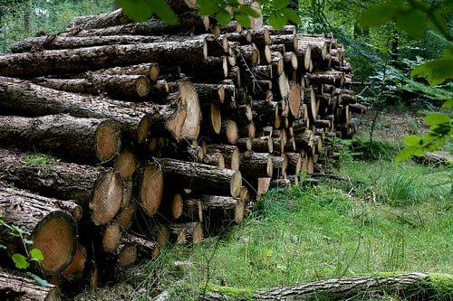 Drenthe / Borger / Gekapt hout / 2012