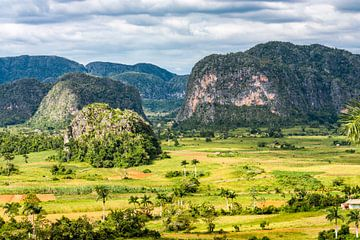 Valle de Viñales, Cuba van Koen Henderickx