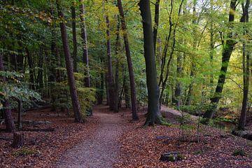 Een bospad langs een beek van Gerard de Zwaan