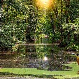 IJsvogel aan het water in het Spreewald van Tilo Grellmann   Photography