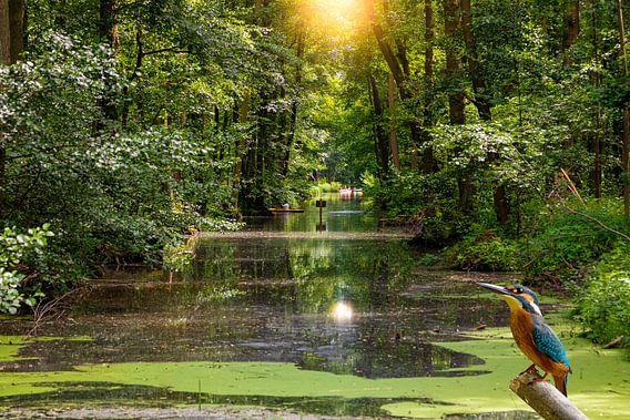 Eisvogel am Wasser im Spreewald