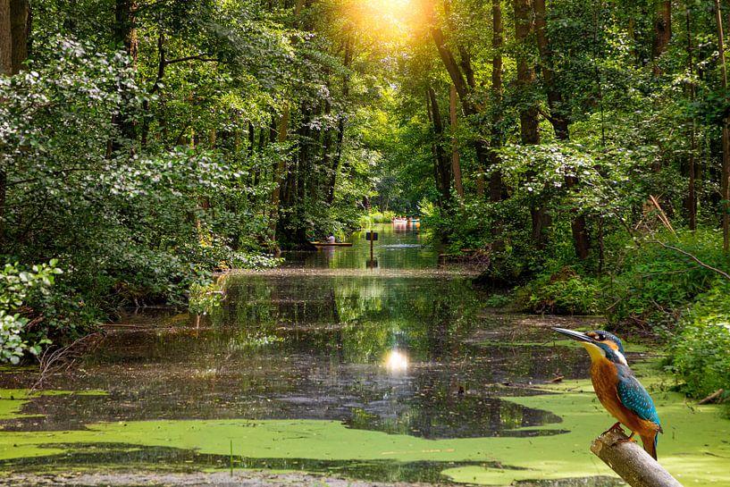 Eisvogel am Wasser im Spreewald von Tilo Grellmann | Photography