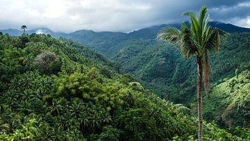 Palme in grünen Hügeln in der Nähe von Dumaguete, Philippinen von Jessica Lokker